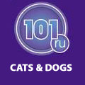 101 RU CATS AND DOGS